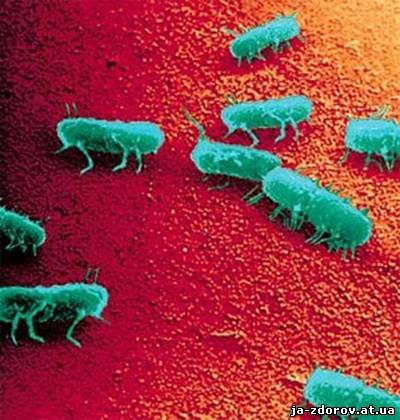 микроб Salmonella enteritidis