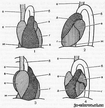 google треугольная форма конфигурации сердца